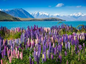 10D HIGHLIGHTS OF NEW ZEALAND + FIJI